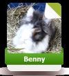 Benny sucht noch Paten