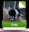 Fritz sucht noch Paten