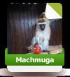 Machmuga sucht noch Paten