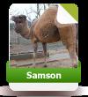 Samson sucht noch weitere Paten