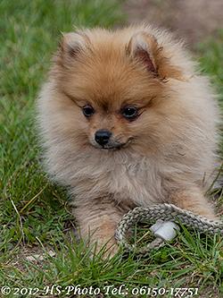 unser Hund Fussel
