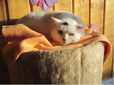 unsere Katze Birte