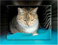 unsere Katze Kirai