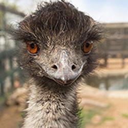 Unser Emu Schorsch